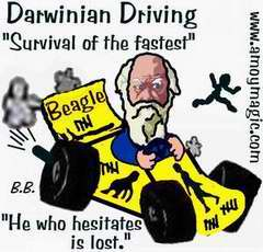 Darwinian Driving cartoon--Survival of the fastest.  Chinese driving doubles as population control.