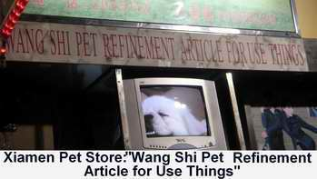 xiamen pet store wang shi pet refinement article for use things